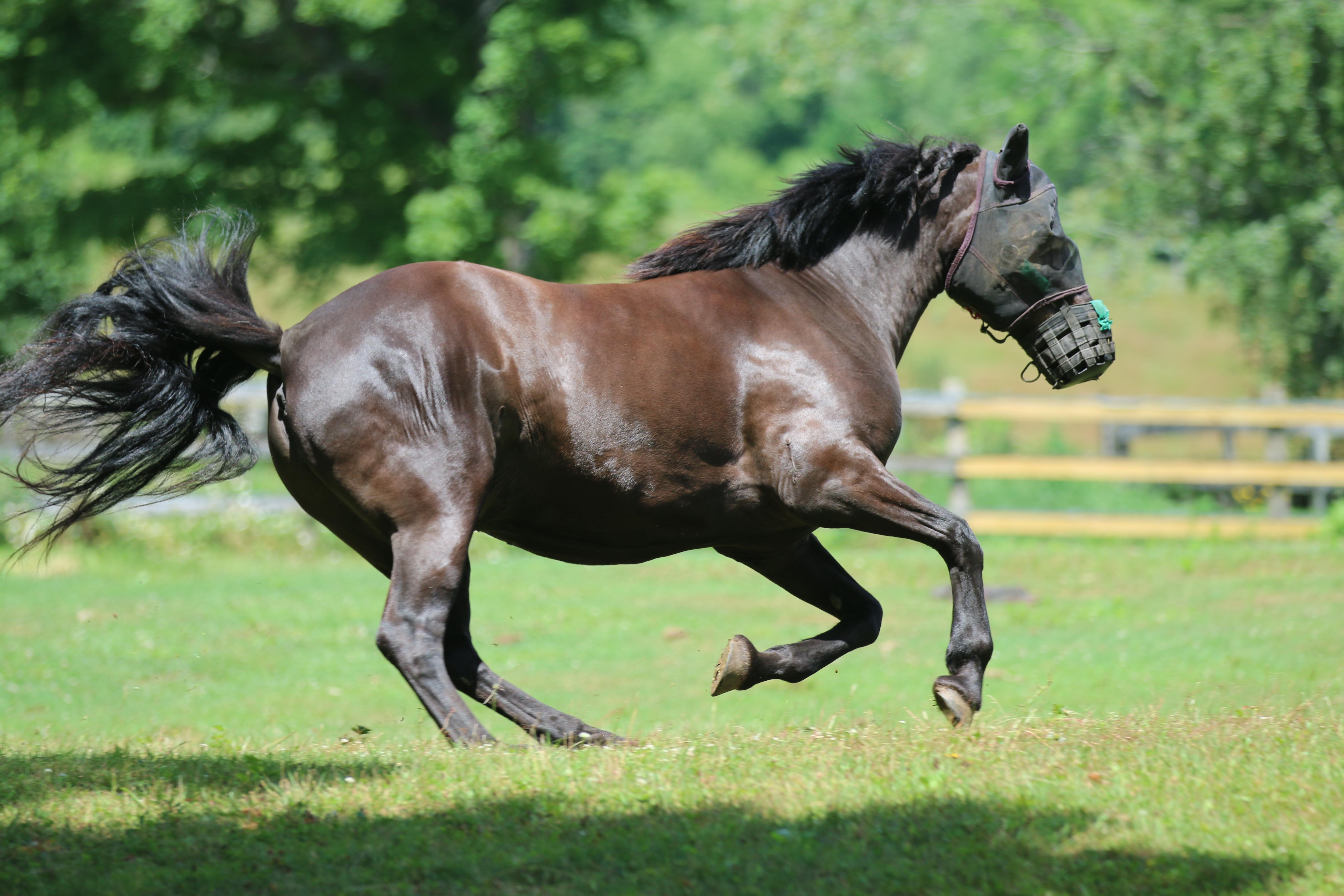 VT100 - horse