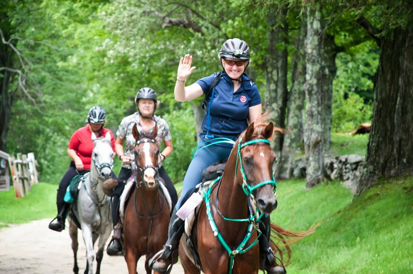 VT100 Horses