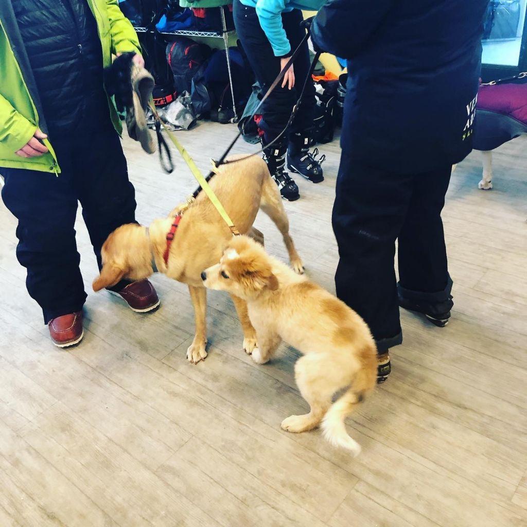 guide-puppies-asaba-vermont-adative-ski-weekend-vermont-100